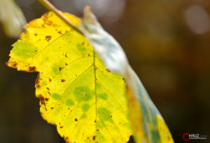 Herbst | Nikon D5100