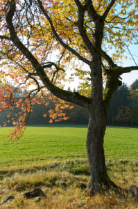 Herbstzeit | Nikon D5100