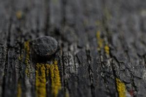 Nagel im Holz | Nikon D5100