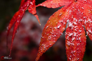 Der Winter kommt | Nikon D5100