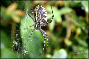 Spider | Nikon D5100