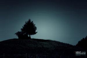 Tree | Nikon D5100