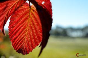 Herbstblatt | Nikon D5100
