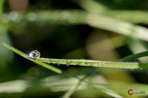 Wassertropfen | Nikon D5100