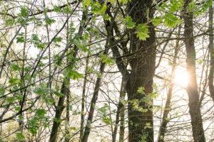 Frühlingssonne | Nikon D5300