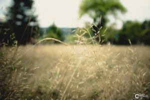 Summer Soon | Nikon D5300