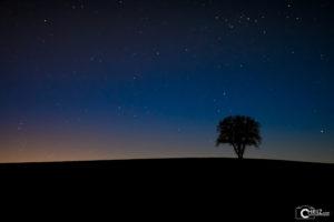 Stars Tree | Nikon D5300