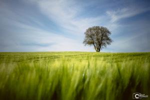 Sunny Evening | Nikon D5300