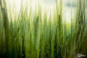 Sunny Cereals | Nikon D5300