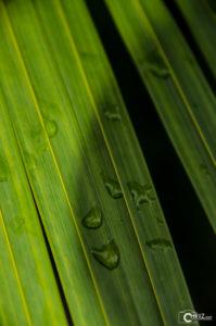 Grand Bahia Principe Cayacoa | Nikon D5100