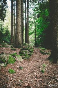 Wald | Nikon D5300
