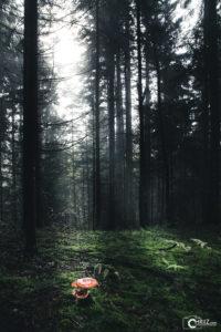 Richtige Licht | Nikon D5300