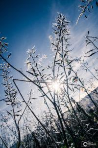 Frost | Nikon D5300