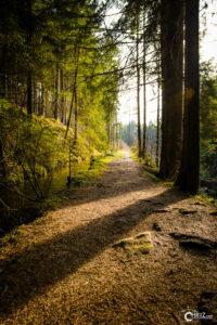 Drachselsried Waldweg | Nikon D5300
