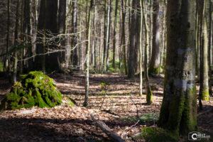 Schwellhäusl | Nikon D5300
