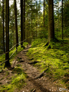 Waldweg | Nikon D5300
