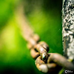 Kette | Nikon D5300
