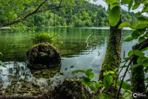 Schwansee | Nikon D5300