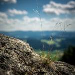 Natur am Kaitersberg | Nikon D5300