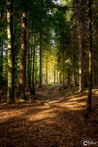 Herbstwald | Nikon D5300