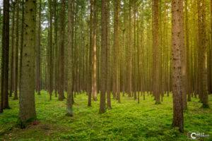Sonnenstrahlen im Wald | Nikon D5300
