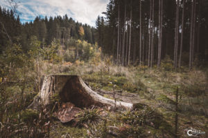Baumstumpf Bayerischer Wald | Nikon D5300