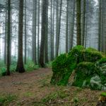 Fels im Wald mit Nebel | Nikon D5300