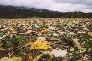 Maisfeld im Herbst | Nikon D5300