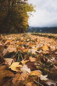 Herbstlicher Weg | Nikon D5300