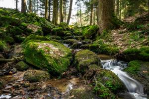 Bachlauf zwischen Steinbühl und Gutendorf | Nikon D5300