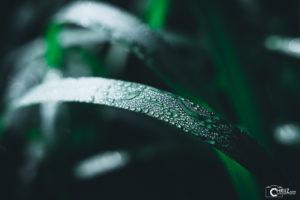 Morgentau | Nikon D5300