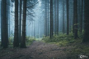 Nebel im Wald am Blaibacher See | Nikon D5300