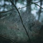 Morgentau am Spinnennetz   Nikon D5300