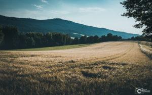 Getreide Feld Bayerischer Wald | Nikon D5300
