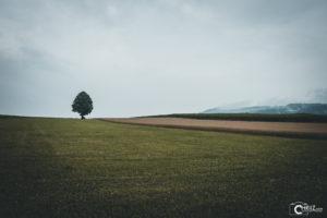 Baum mit Getreide | Nikon D5300