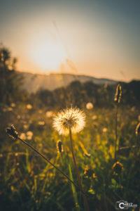 Pusteblume Herbst | Nikon D5300