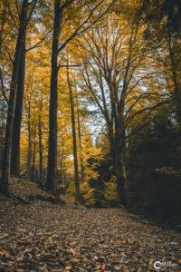 Herbstlicher Wald | Nikon D5300