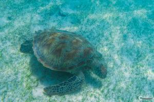 Malediven Kuredu | Nikon D5300