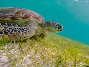 Malediven Kuredu | GoPro