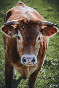 Kuh | Nikon D5300