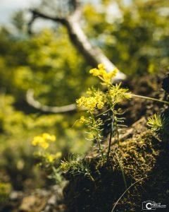 Spring | Nikon D5300