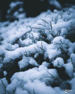 Winter | Nikon D5300