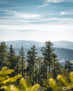 Enzian Bayerischer Wald | Nikon D5300